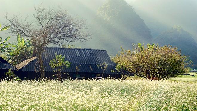 autumn in Moc Chau