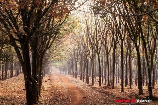 autumn in Binh Phuoc